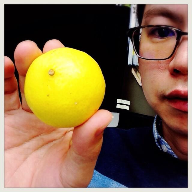 【幻のミカン】黄色いみかん『黄金柑』を食べてみMAX