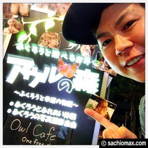 【秋葉原】日本最大級の梟数『フクロウカフェ アウルの森』感想00