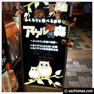 【秋葉原】日本最大級の梟数『フクロウカフェ アウルの森』感想01