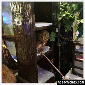 【秋葉原】日本最大級の梟数『フクロウカフェ アウルの森』感想15