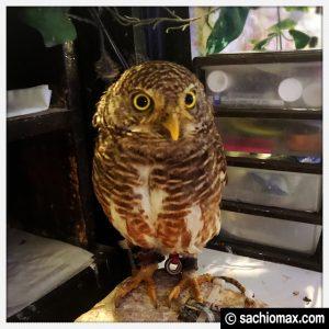 【秋葉原】日本最大級の梟数『フクロウカフェ アウルの森』感想17