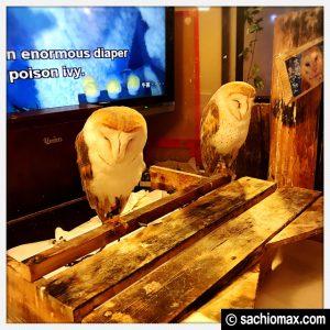 【秋葉原】日本最大級の梟数『フクロウカフェ アウルの森』感想20
