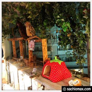 【秋葉原】日本最大級の梟数『フクロウカフェ アウルの森』感想21