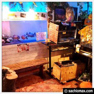 【秋葉原】日本最大級の梟数『フクロウカフェ アウルの森』感想22