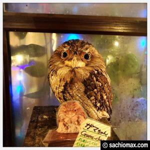 【秋葉原】日本最大級の梟数『フクロウカフェ アウルの森』感想_24