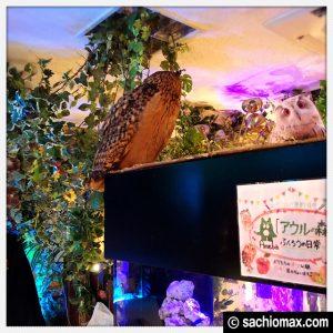 【秋葉原】日本最大級の梟数『フクロウカフェ アウルの森』感想38