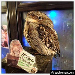 【秋葉原】日本最大級の梟数『フクロウカフェ アウルの森』感想43