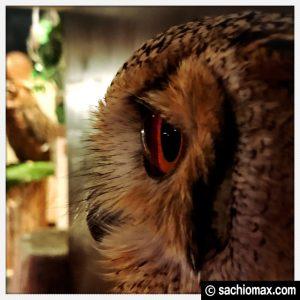 【秋葉原】日本最大級の梟数『フクロウカフェ アウルの森』感想47
