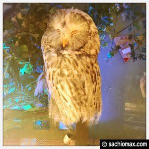 【秋葉原】日本最大級の梟数『フクロウカフェ アウルの森』感想53