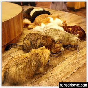 【秋葉原】10分から遊べる猫カフェ『MOCHA』に行ってみた(料金など)10