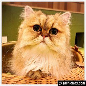 【秋葉原】10分から遊べる猫カフェ『MOCHA』に行ってみた(料金など)11