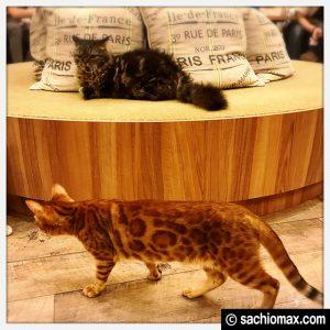 【秋葉原】10分から遊べる猫カフェ『MOCHA』に行ってみた(料金など)12