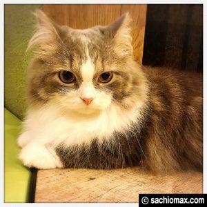 【秋葉原】10分から遊べる猫カフェ『MOCHA』に行ってみた(料金など)14