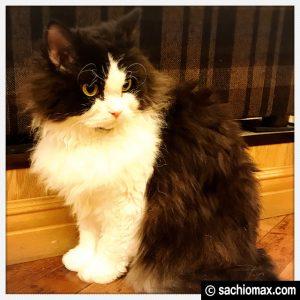 【秋葉原】10分から遊べる猫カフェ『MOCHA』に行ってみた(料金など)15