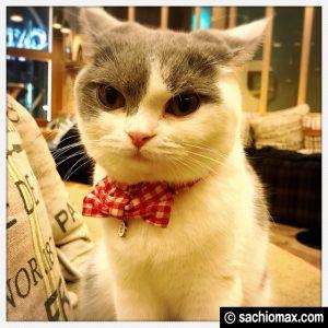 【秋葉原】10分から遊べる猫カフェ『MOCHA』に行ってみた(料金など)17