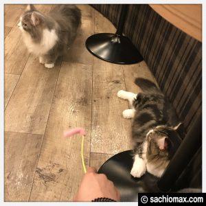 【秋葉原】10分から遊べる猫カフェ『MOCHA』に行ってみた(料金など)18